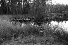 Sweden 2014 (SS) Tags: trees light lake holiday nature monochrome grass composition reflections landscape photography pentax sweden perspective k5 2014 ss