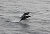 Flipper (luckyocki) Tags: canon meer ballett delphin kreuzfahrt biskaya