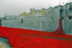 Poppies in red (Travis Pictures) Tags: city london castle photoshop nikon fort poppy poppies rememberance moat fortress toweroflondon towerhill cityoflondon d5200 toweroflondonpoppies