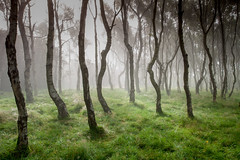 Misty Bolehill - Commended: Landscape Photographer Of The Year 2014 (J C Mills Photography) Tags: wood uk autumn trees england mist fog woodland landscape derbyshire birches bolehill 2014 commended longshawestate takeaview lpoty