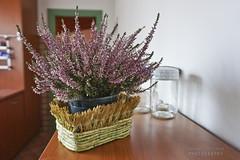 Autumn bokeh (Andrea Rapisarda) Tags: interiors bokeh sony interni sfocato allrightsreserved a6000