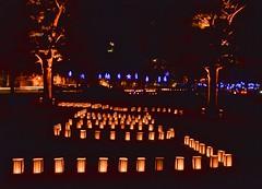 Lantern Field