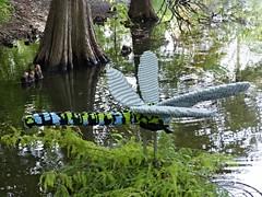 LEGO Green Darner Dragonfly at S.A. Botanical Gardens (jamhui) Tags: gardens dragonflies legos flies botanicalgardens legoart sanantoniobotanicalgardens seankenney legart sanantonioart texasbotanicalgardens sanantoniolegoexhibits legodragonfly legoartexhibits sanantonioartexhibits sanantonioartshows seankenneylegoart artwithlegobricks