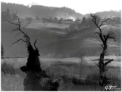 ARCINGES, LES CHÂTAIGNIERS CENTENAIRES (Gilles Poyet photographies) Tags: nature noiretblanc loire soe autofocus rhônealpes aplusphoto artofimages paysroannais rememberthatmomentlevel4 rememberthatmomentlevel1 rememberthatmomentlevel3 rememberthatmomentlevel7 rememberthatmomentlevel9 rememberthatmomentlevel8 arcinges