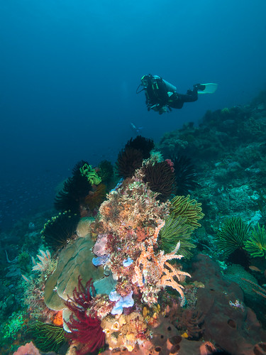 Reef scene and model (Pantar Island, Alor)