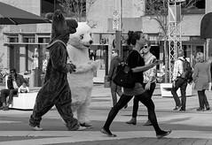 Scooby Doo and the Lascivious Bear (Szoki Adams) Tags: blackandwhite bw montreal polarbear scoobydoo chic younggirl ogling inahurry blackwhitephotos szoki placedesspectacles szokiadams