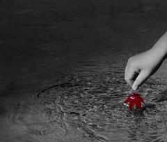Otoño-秋-Autumn (Nishizaka Takeo) Tags: autumn bw hands gimp manos bn otoño 秋 selectivecolor 手 モノクロ namaze 生瀬 武田尾 takedao rawtherapee nikond7000