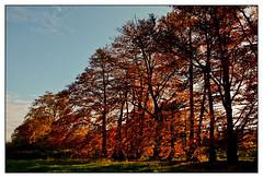 5D-8623-200 (ac | photo) Tags: autumn trees light fall nature colors leaves landscape fallcolors