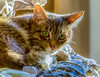Daisy (Bob Woitunski) Tags: pet animal cat pest feiline