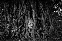 Wat Maha-That (Rkitichai) Tags: blackandwhite bw thailand temple buddha buddhist tourist historical attraction ayutthaya phranakornsriayutthaya travelnutzmn