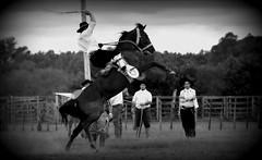 Basto aberto (Eduardo Amorim) Tags: gacho gachos gaucho gauchos cavalos caballos horses chevaux cavalli pferde caballo horse cheval cavallo pferd crioulo criollo crioulos criollos cavalocrioulo cavaloscrioulos caballocriollo caballoscriollos pampa campanha fronteira bag riograndedosul brsil brasil sudamrica sdamerika suramrica amricadosul southamerica amriquedusud americameridionale amricadelsur americadelsud cavalo         hst hest hevonen  brazil eduardoamorim gineteada jineteada