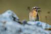_DSC9618 (Boréalis91) Tags: fontdurles macrofamille vercors marmots voielactã©e