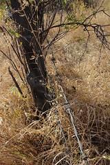 2016 Malheur Refuge Fence Pull (Oregon Natural Desert Association) Tags: heidi hagermeier onda oregonnaturaldesertassocation restoration fencepull malheur national wildlife refuge volunteer easternoregon highdesert steensmountain fall