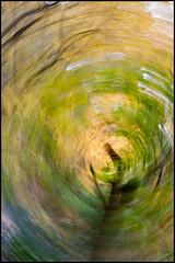 Autumn Vortex No. 1 (ZinBoy) Tags: autumn fall vortex trees foliage foliageeventhorizon leaves green yellow circular centralpark northwoods theravine intentionalcameramovement motion rotation