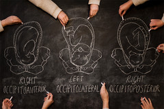Day 231, Year 9. (evilibby) Tags: 365 3659 365days 365days9 libby chalkboard chalkboardwall diagram drawing draw chalk learn learning knowledge fetalpresentation hand hands rightoccipitoanterior leftoccipitolateral rightoccipitopoterior maternalpelvis fetus baby longitudinal flexed
