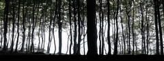 Into The Woods (*Nils aus Kiel*) Tags: panorama nature forest wald shadows green ngc widescreen panasonic g6h light morning landscape landschaft germany