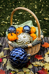 Confused (jah32) Tags: thanksgiving christmas pumpkins minipumpkins ornaments leaves basket autumn fall confused