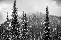 Mt. Roberts (JeffAmantea) Tags: mt roberts mount trees cloud fog bw black white mountains mountain kootenay kootenays rossland range seven summits sony alpha a7ii outdoor snow outside explore nikkor 50mm 14 ai contrast