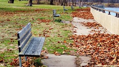 Benches (treesandtravels) Tags: starved rock illinois nature bench leaves river