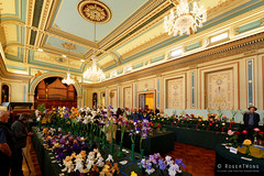 20161105-13-Open House Hobart - Town Hall floral show (Roger T Wong) Tags: 2016 australia hobart openhouse rogertwong sel1635z sony1635 sonya7ii sonyalpha7ii sonyfe1635mmf4zaosscarlzeissvariotessart sonyilce7m2 tasmania townhall architecture building floraldisplay