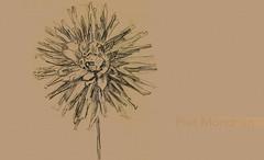 FloresPietMondrian_006 (Visualística) Tags: flores pietmondrian mondrian arte art interpretaciones abstracción paráfrasis versiones análisis flowers flower flor vegetal