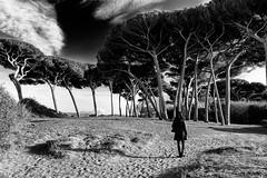 Baratti la pineta (Antonio Casti) Tags: casty baratti pini pineta livorno toscana street paesaggio mare italy italia panorama spiaggia nuvoloso viaggio it blackandwhite