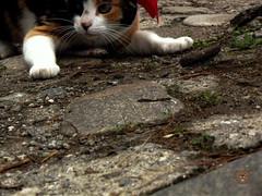 Hello (dan95_Zambrano) Tags: gato cat animal natural mascota felino divertido escondido suelo patas amor cario
