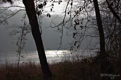 nebel am grunewaldsee (torsten hansen (berlin)) Tags: torsten hansen berlin wwwdiehansensde wwwtorstenhansenfotografiede wwwtorstenhansende licht light malerei painting malen paint lichtmalerei lightpainting wwwlightpaintingberlinde wwwtorstenhansenschmuckdesignde