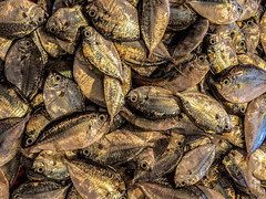 Fish Pile (FotoGrazio) Tags: fish streetportrait photographicart internationalphotographer fisheyes food slimy streetphotography artofphotography business goldenyellow fishmarket pattern market freepicture smallfish freshfish californiaphotographer wet photographicartist 500px fins freetodownload asian composition saltwaterfish vendor nature wetmarket fotograzio digitalphotography animal capture man waynegrazio photography scales photographersincalifornia animals seafood art streetscene pacificislanders worldphotographer legazpi freeimage philippines flickr red sandiegophotographer internationalphotographers people male shiny stinky protein photographersinsandiego downloadforfree waynesgrazio photoshoot texture pileoffish filipino pinoy explore