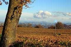 Lumiere (B Plessi) Tags: macerata italia colline monti azzuri nuvole nuage cloud cielo sky marche 2016 troupeau gregge