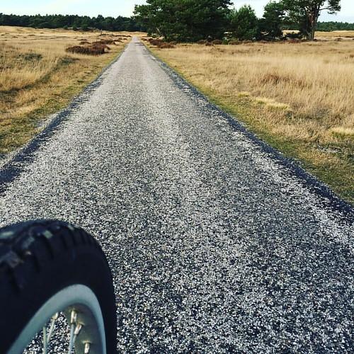 On the way .. #nationalpark #hogeveluwe #bike #freebike #netherlands #veluwe #instagood #exploremore #lesphotographes #instatravel #wanderlust #spreadlove