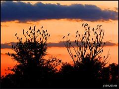 Como hojas de árbol. (Jose Roldan Garcia) Tags: naturaleza laguna libre luz cielo contraluz milanos colores árboles libertad