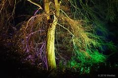 DSC04218 (Twareg) Tags: 2016 aboretum bpw enchanted forest westonbirt bathphotowalk gloucestershire england