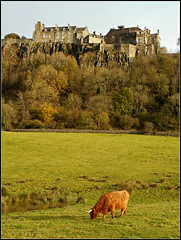Stirling Castle (with highland cow) (juzzie_snaps) Tags: castle