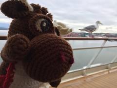IMG_1782 (The Crochet Crowd) Tags: crochetmoose amigurumi moose crochet doll alaska britishcolumbia thecrochetcrowd michaelsellick jeannesteinhilber danielzondervan crochetcruise mooseontheloose