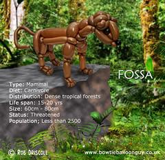 A-Z of Endangered Species – Fossa (magirob) Tags: fossa wwf wwfuk endangeredspecies widlife balloontwisting twist balloon balloons balloonsculpture