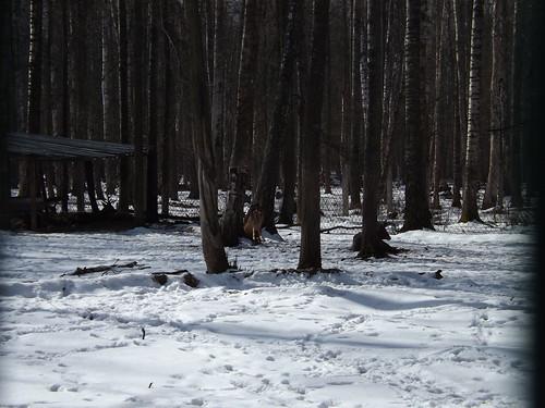 Приокско-Террасный Государственный Биосферный Заповедник