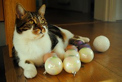 Brian and the baubles (zawtowers) Tags: cat kitty cute feline brian baubles christmas decoration balls circular waiting helping out assisting