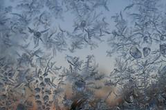 Frost-flowers (jehazet) Tags: winter ijsbloemen frostflowers jehazet