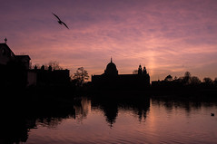 Flying into the pink sky (valk212) Tags: sky sunset twilight pinksky pinkclouds pink bird flying galway cathedral galwaycathedral silhouette skyline skyscape landscape