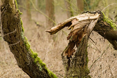 20170104-_IMG0945-Edit (fleetingphotons) Tags: pentaxk1 smcpentaxa200mmf28ed wasingestate fishing warrenbeat kennet trees