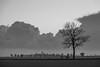 Standing tall (Infomastern) Tags: bw countryside landsbygd landscape landskap svartvit tree träd