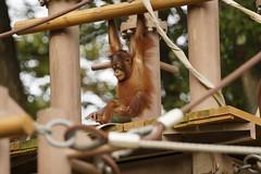 20141012145426_1398_SLT-A99V (iLoveLilyD) Tags: animal zoo sony fullframe 2014 glens minoltaamount α99 slta99v sal70400g2 ilovelilyd