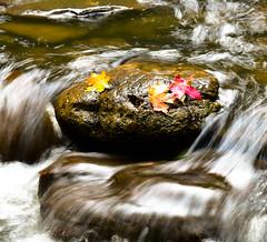 Oak Creek Canyon (Art Mullis Photography (All Images Copyrighted)) Tags: arizona water rock fallcolors sedona oakcreekcanyon