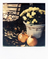October 2014 (Brock5604) Tags: flowers autumn color fall film home nature leaves bench polaroid sx70 october seasons outdoor pumpkins mums fallen instant week impossible roid 2014