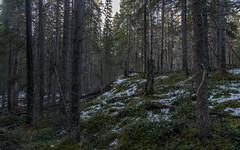 Petäjäjärvi & Liinalamminneva (Juho Holmi) Tags: petäjäjärvi liinalamminneva 2014 natura 2000 nature finnish finland pirkanmaa tampere ylöjärvi kuru swamp mire trek trekking hike hiking sunset finnland finlandia pentax k5 k 5 sigma af 1770mm f2845 dc macro 17 70 28 45 thisisfinland visitfinland