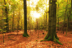 Golden Goal (Gruenewiese86) Tags: autumn light sun nature canon landscape gold licht buchenwald laub herbst natur beam landschaft 1740 harz 6d 2014 ilsetal ilsenburg buchen sachsenanhalt harzlandschaft
