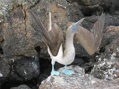 Galápagos - Isabela-171