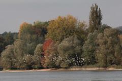 Rhein ( Hochrhein - Fluss - River ) zwischen S.tein am Rhein und der B.ibermhli an der Grenze vom Kanton Thurgau und Kanton Schaffhausen der Schweiz (chrchr_75) Tags: chriguhurnibluemailch christoph hurni schweiz suisse switzerland svizzera suissa swiss chrchr chrchr75 chrigu chriguhurni 1410 oktober 2014 rhein fluss river hochrhein albumrhein albumhochrhein oktober2014 hurni141012 rhin reno rijn rhenus rhine rin strom europa joki rivire fiume  rivier rzeka rio flod ro