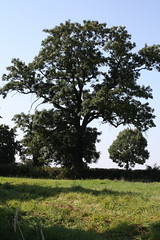 Baum (borussia1972) Tags: tree canon germany deutschland feld nrw baum canon1000d
